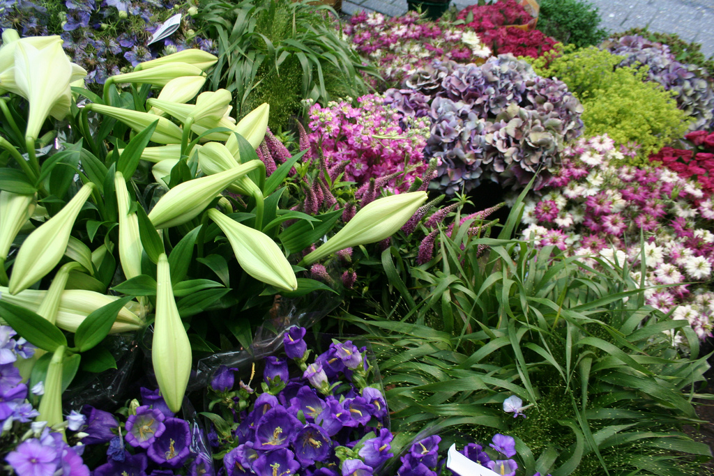 amsterdam-bloemenmarkt-03