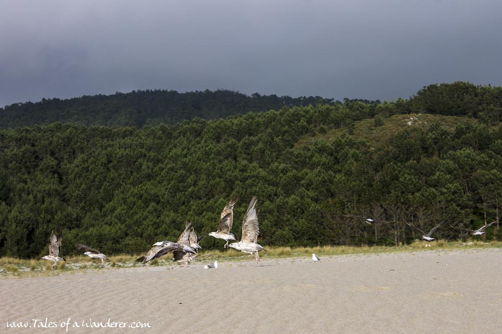 praia_do_rostro25