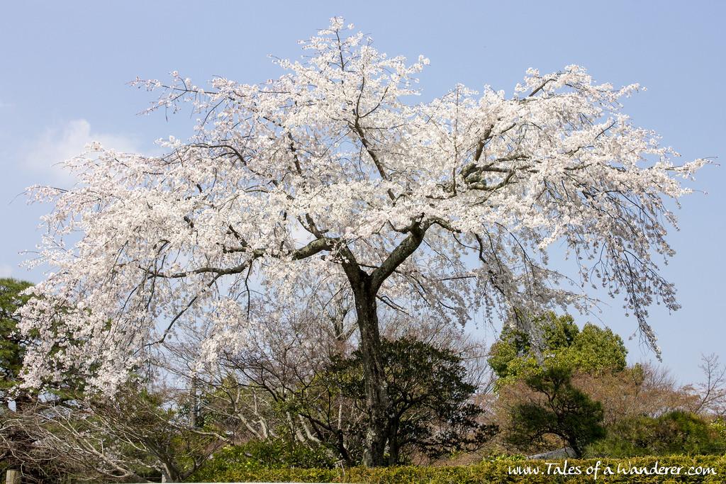 arashiyama-12
