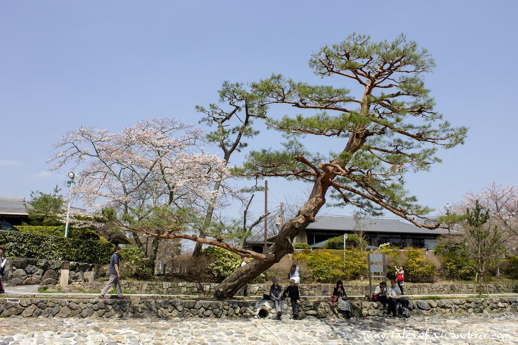 arashiyama-13