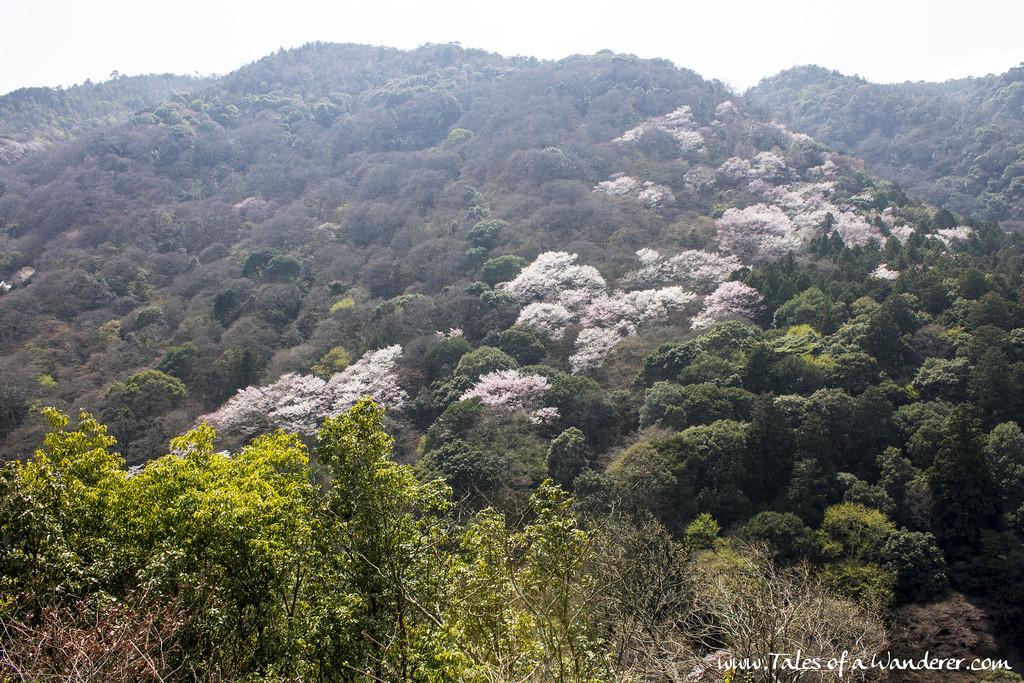 arashiyama-21