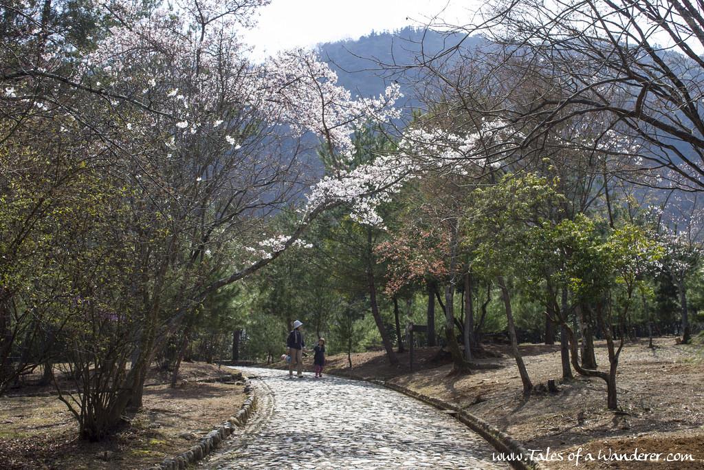 arashiyama-22