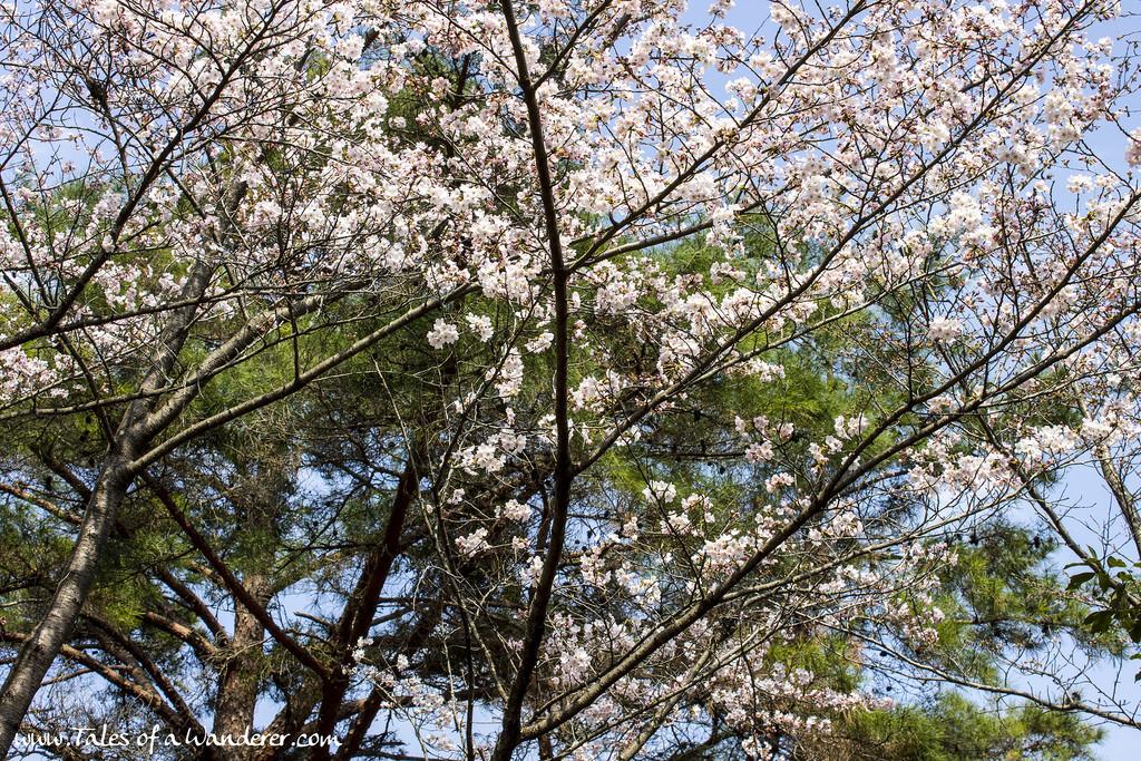 arashiyama-24