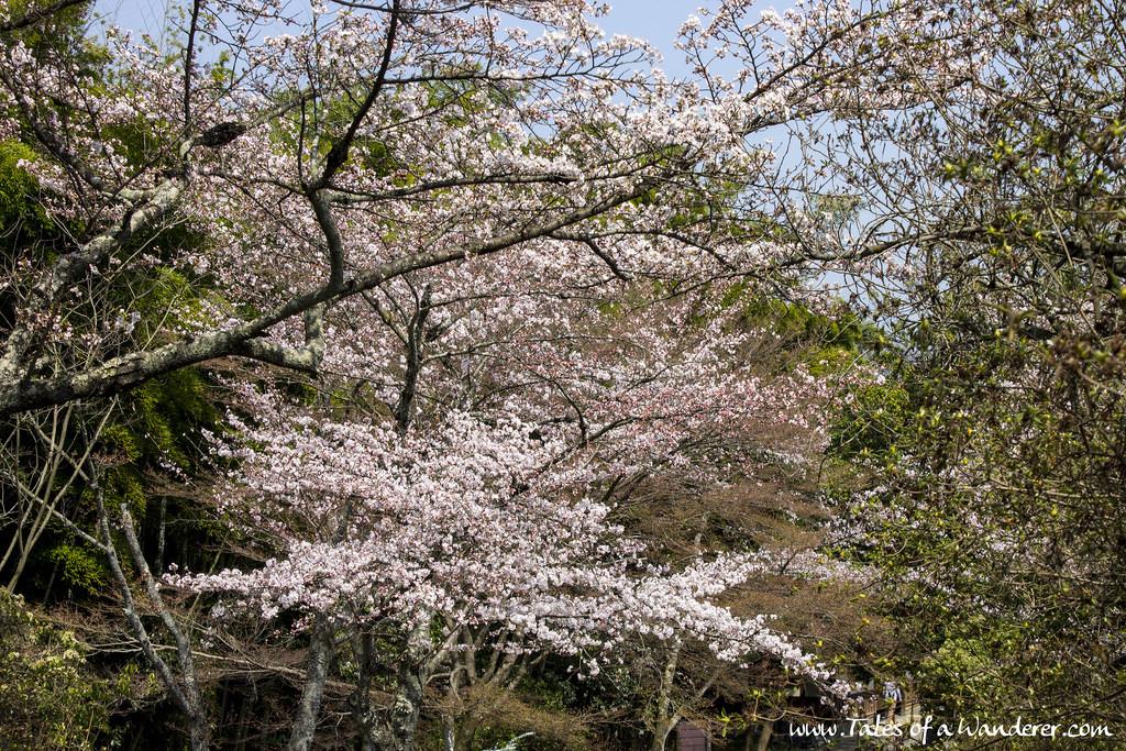 arashiyama-25