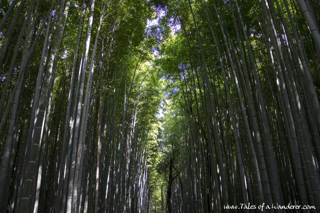 arashiyama-26