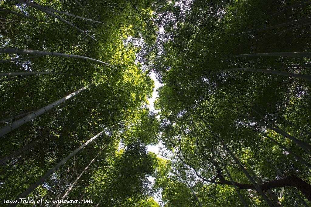 arashiyama-27