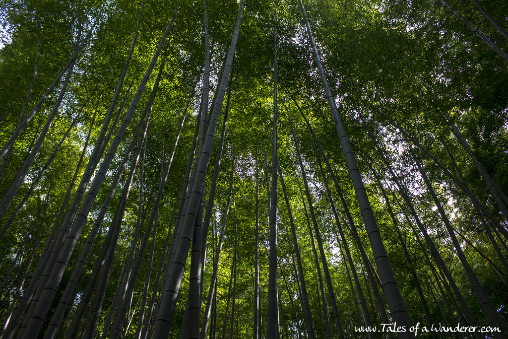 arashiyama-28