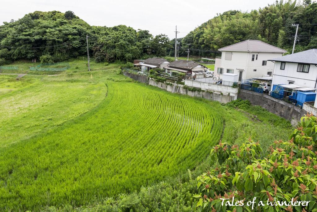 tokyo-wan-kannon-07